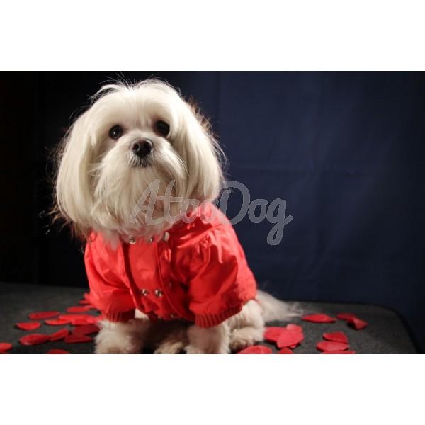 doudounes pour chien imperm ables avec capuche rouge. Black Bedroom Furniture Sets. Home Design Ideas