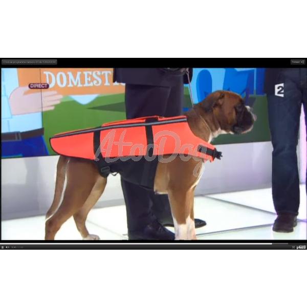 harnais flottant gilet de sauvetage pour chien. Black Bedroom Furniture Sets. Home Design Ideas