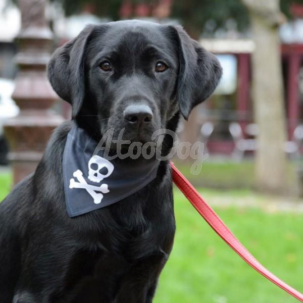 3bdbbe37a94d Collier bandana chien Sylvester · Collier bandana chien Tete de mort