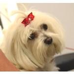 barette pois rouge chien