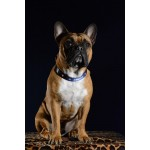 chien-bouledogue-supporter-foot-collier-france