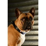 collier-france-chien-bouledogue-france-football-supporter