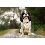 MEDAILLE-CHIEN-CAVALIER-KING-CHARLES