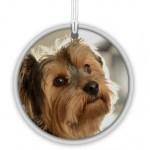 $SUPOA-decoration-photo-chien