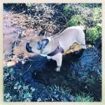 harnais-rich-dog