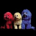 chien en couleur