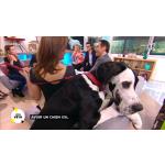 collier pour chien avec strass