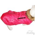 manteau bichon