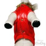 manteau rouge chien