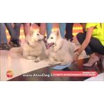 tapis anti chaleur chien