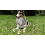 Friandise chausson chien