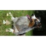 friandise soulier chien