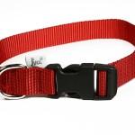 collier nylon chien
