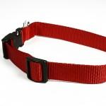collier de chien rouge