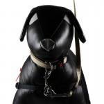 halti collier chien