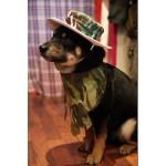 chapeau chiens