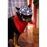 chapeau bleu pour chien