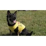 T-shirt chien jaune