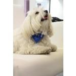 Collier bandana jean chien