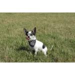 foulard police chien