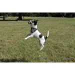 foulard chien garde-du-corps