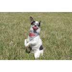 Foulard chien GRRR
