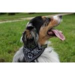 foulard bandana noir chien