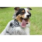 Bandana breton chien