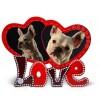Cadre photo pour chien personnalisé pour chien