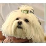 noeud vert paillette chien