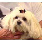 barrette pois fleur chien