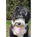 bandana chien j aime ma maitresse