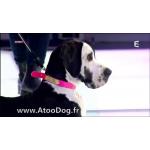 collier gravé chien