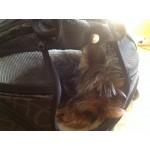 sac transport chien