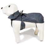 chien imper bleu