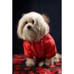 pull rouge pour chien