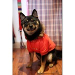 pull hiver chien