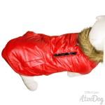 blouson rouge chien