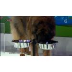 support gamelle grand chien