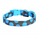 collier turquoise chien