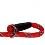 lasso rouge de chien