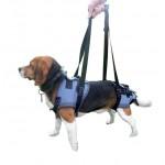 baudrier_pour_chien_handicap_rhumatisme