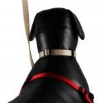 collier chiens