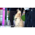 Harnais transport voiture chien