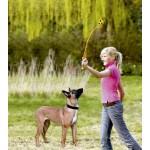 jouet chiens