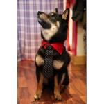 cravate pour chien