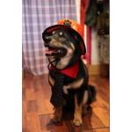 chapeau de chien