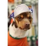 chapeau chien