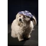 casquette chien