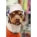 casquette pour chien